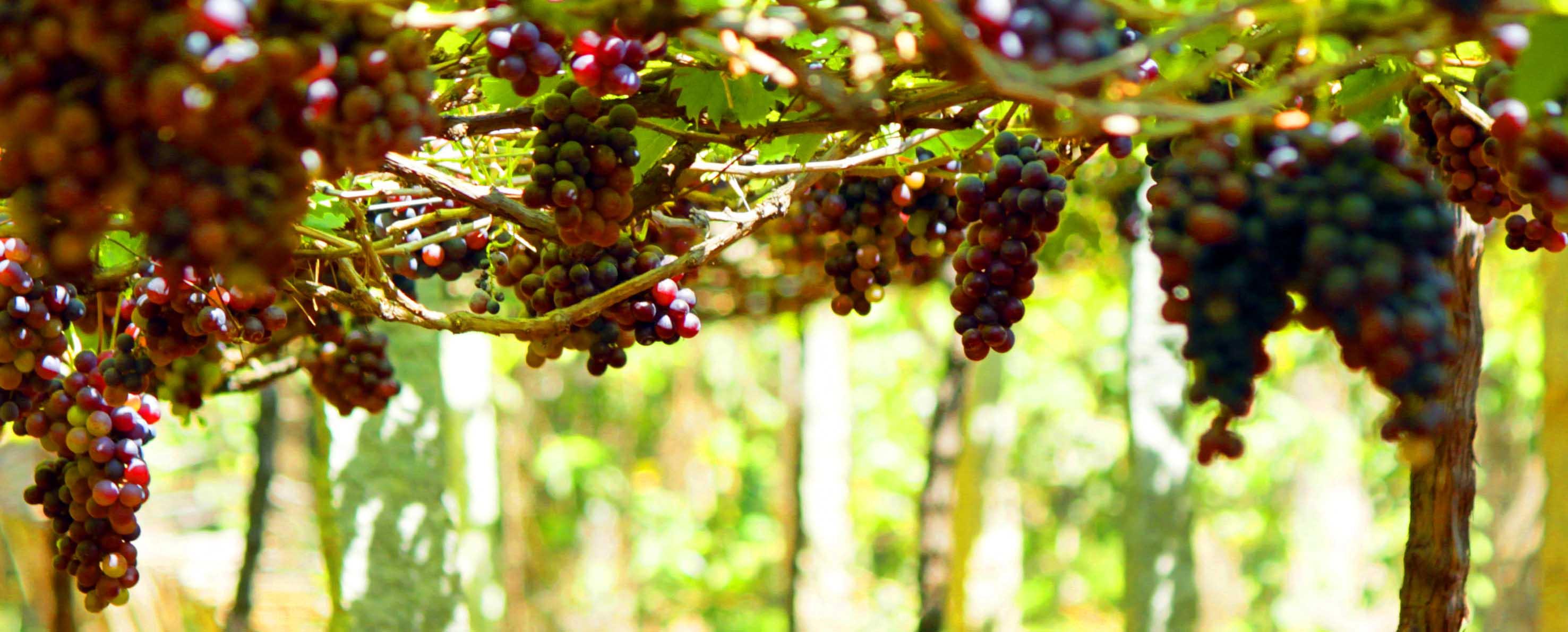 Kerala-Spices-Plantation-Tour2.jpg