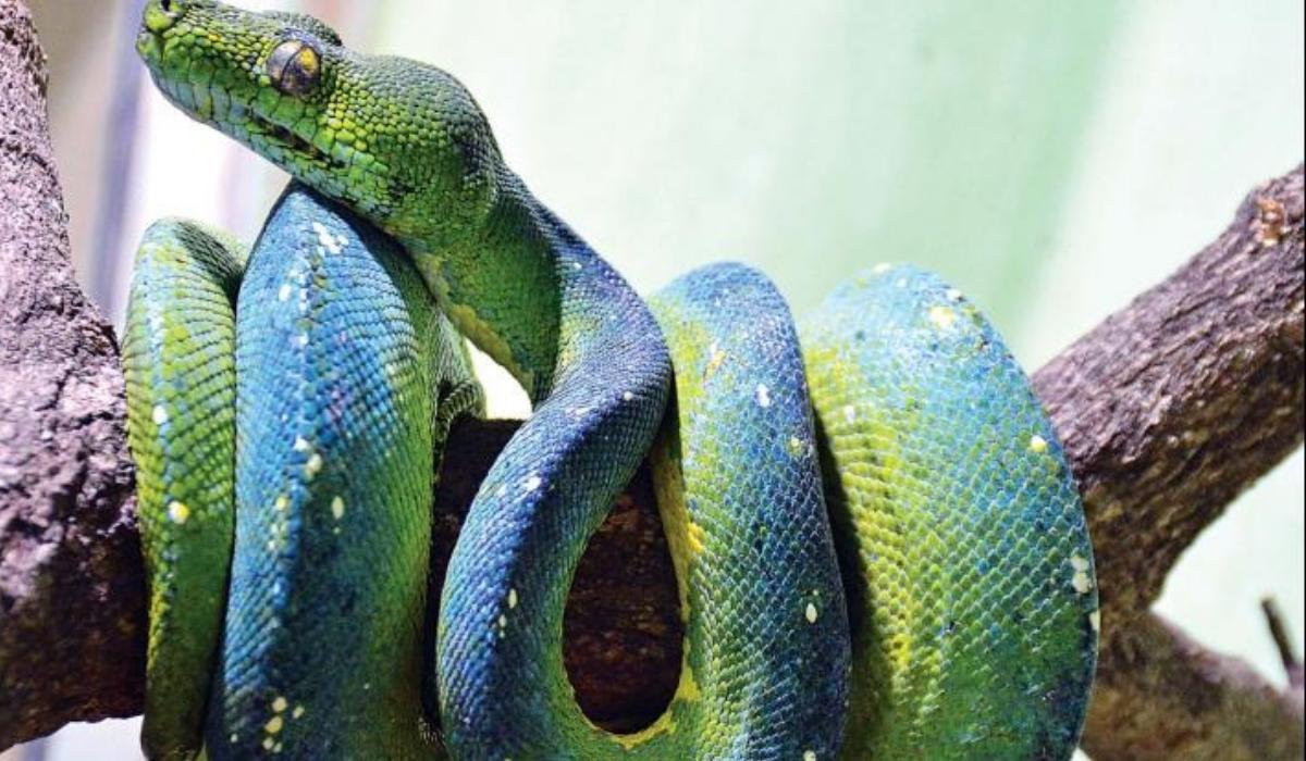 Guindy National Park and Snake Park.jpg