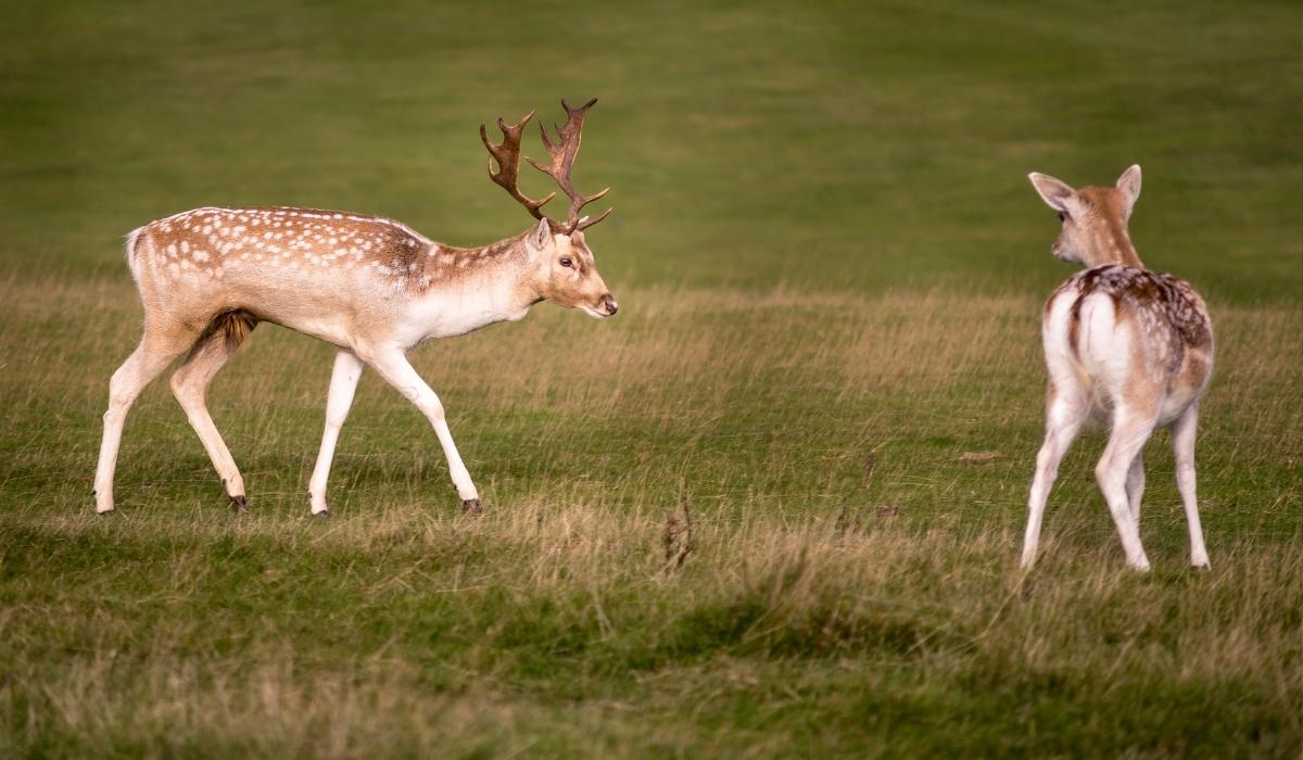 Deer Park (1).jpg