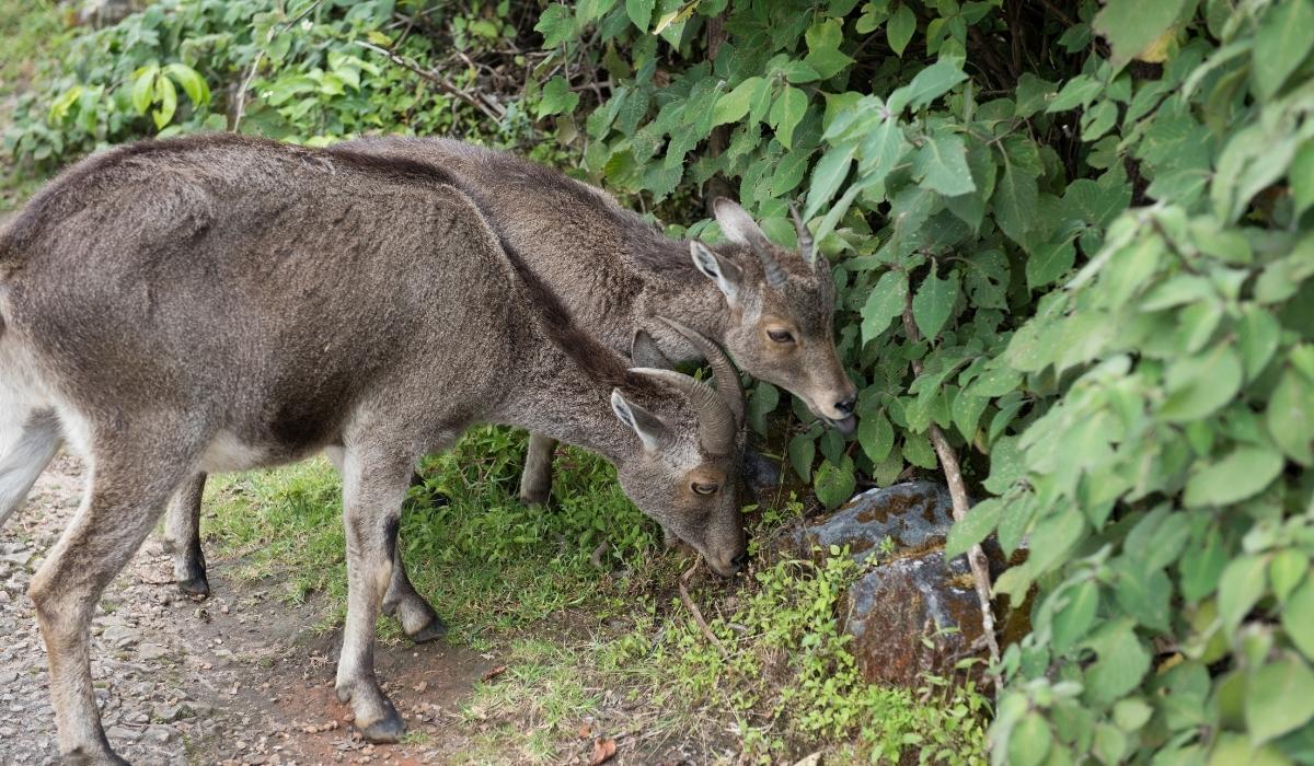 _Eravikulam National Park.jpg