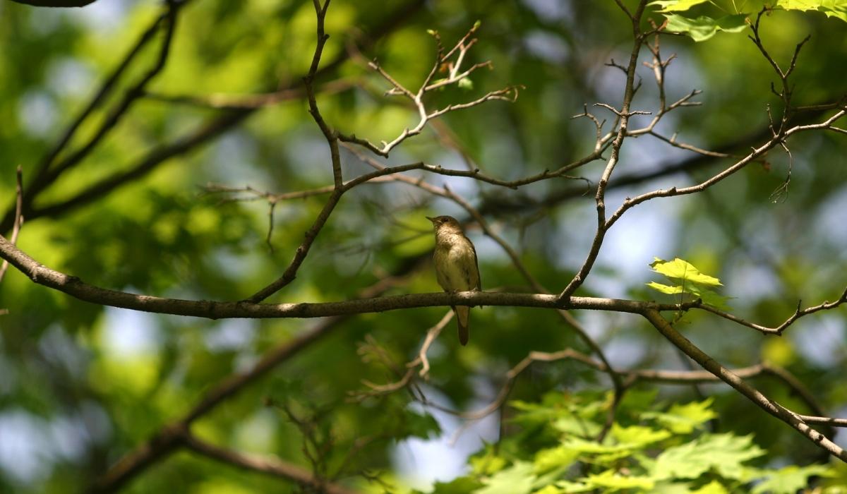 Nightingale Park.jpg