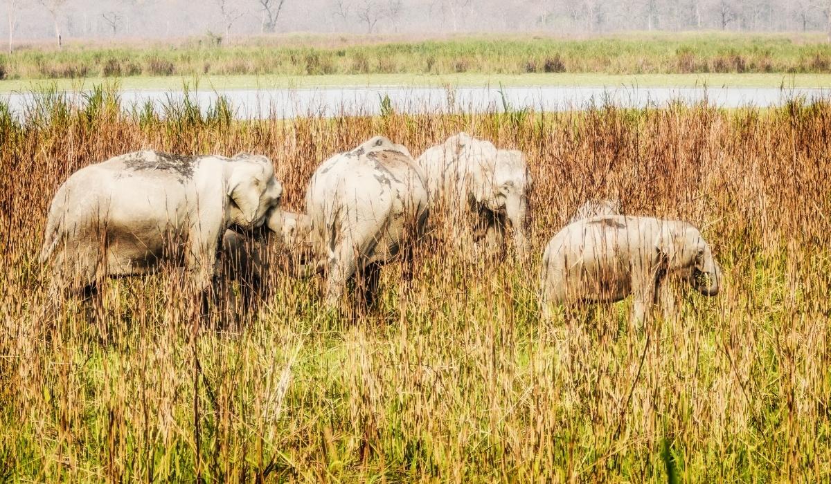Kaziranga National Park.jpg
