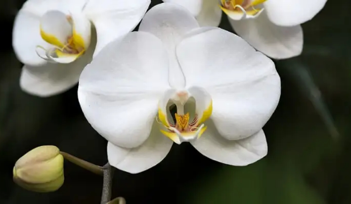 Orchid Research And Development Centre.jpg