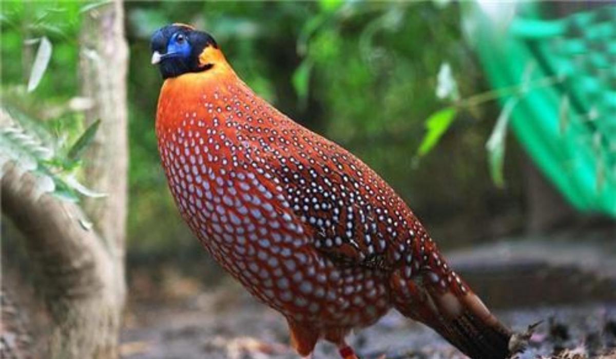 Himalayan Bird Park.jpg